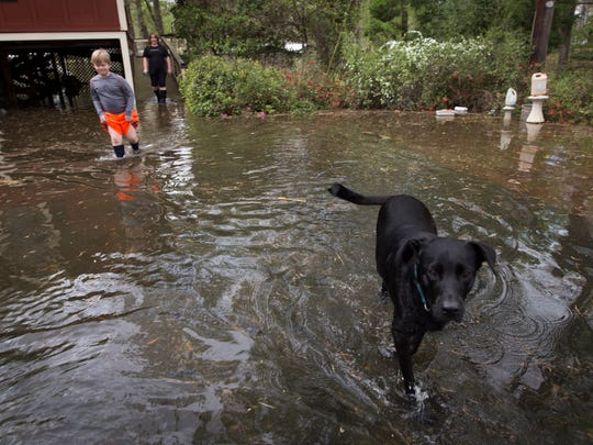 Henry, a lab, walks through floodwaters as his owners