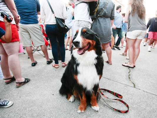 festival, animals, dogs