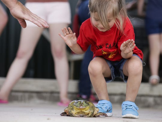 A girl roots for her frog in the jumping competition