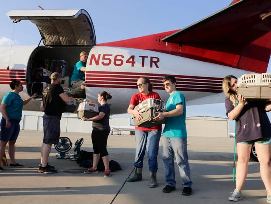 Volunteers load cats onto an airplane bound for Calif.