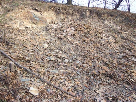 The Locust Lane roadcut where Olenellus trilobites