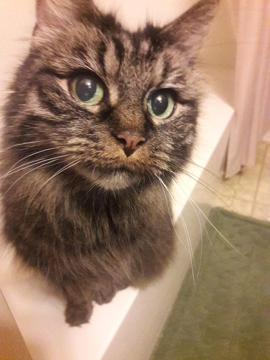 Lost cat20170605_125555