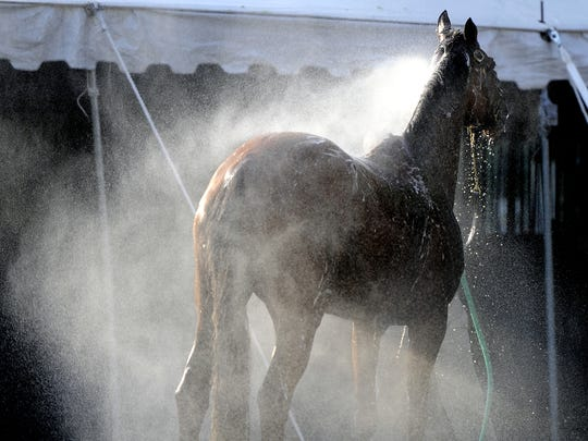 A horse gets a bath at the stable before the 74th running
