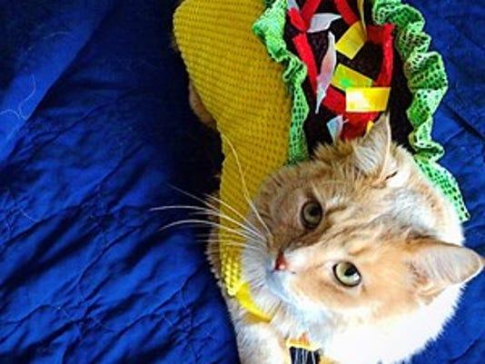 636123077496821916-taco-cat.jpg