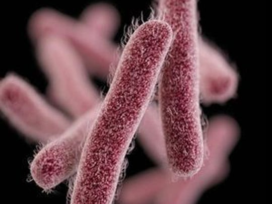 Shigellosis is an illness caused by Shigella bacteria, which can be transferred by hand-to-mouth contact with stool (feces) from a sick person or animal, eating contaminated foods, or drinking contaminated water.