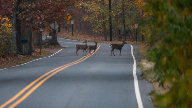 Police are urging caution as deer mating season is resulting in numerous motor vehicle collision.