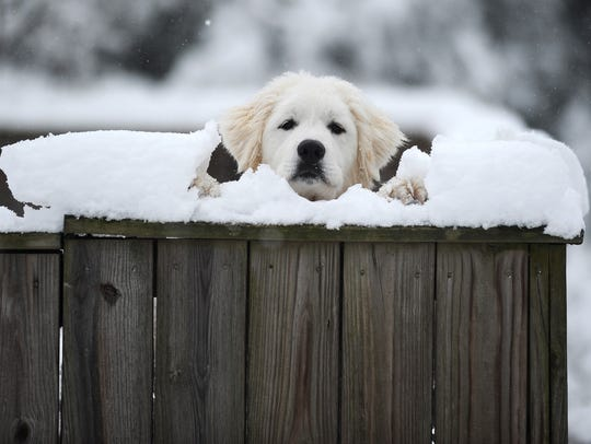File photo of dog peeking over a snow-covered fence in Cape Charles, Va.