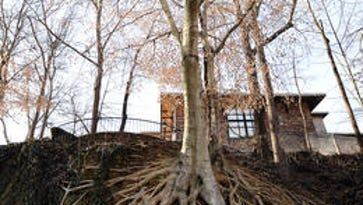 Governor's school to expand with concern for iconic root tree in Falls Park