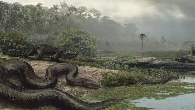 Titanoboa was as long as a school bus and as heavy as a Mini Cooper.