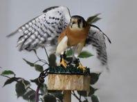 Learn to create bird-friendly habitats and more at Algoma's Bird City Celebration