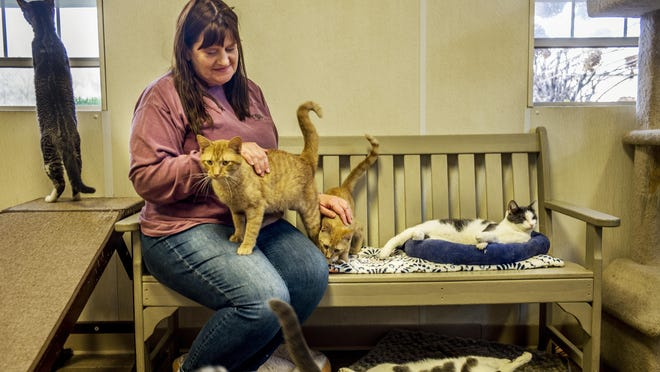 Tazewell Animal Protective Society executive director Holly Crotty spends a few minutes in the open cat room on Tuesday, November 10, 2020. The no-kill shelter has instituted COVID-19 restrictions such as requiring reservations to stop by for a view of the animals up for adoption.