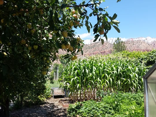 Springdale Elementary School garden.