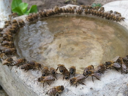 Bees need water for digestion and to regulate their