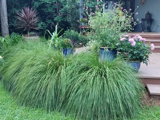 Lomandra breeze helps tie the deck to the rest of the garden.