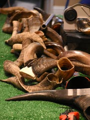 Horns sit, waiting to be transformed. Chabad of Naples