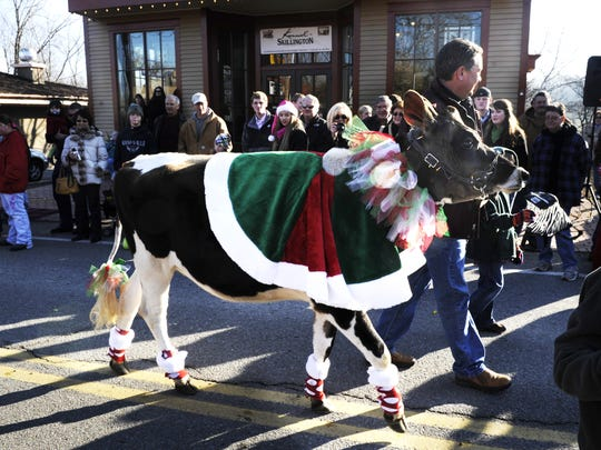 Eddie Harris of Harris Jersey Farm of Cleveland, Tenn. guides his jeresy cow,Isabella, in the  7th Annual Leiper's Fork Christmas Parade on Dec. 18, 2010.