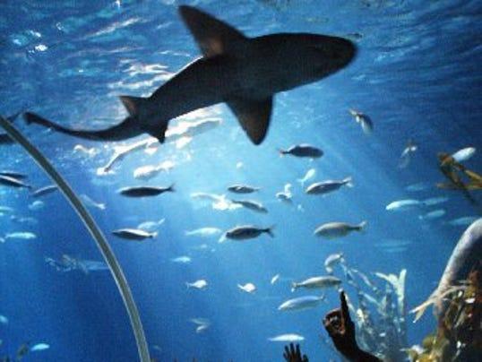 Aquarium Great Lakes Crossing