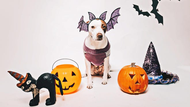Dot shows off her best Halloween costume. Learn more about the 2020 festivities for Wag-O-Ween at wagoween.org.
