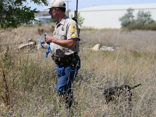 Officials kill great falls mountain lion for Fish wildlife and parks