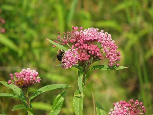 635998667284408496-05-30-2016-Pollinators-bees-monarch.JPG