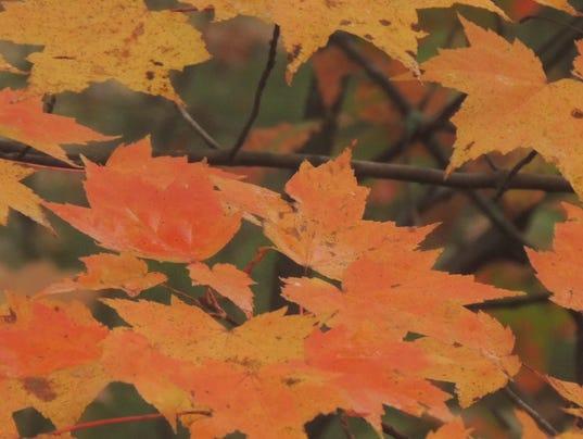 635485641671570274-Leaves