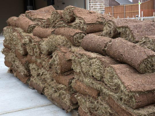 Bermuda sod is best laid down as fairly close to the average date of your last killing freeze for your part of Texas.