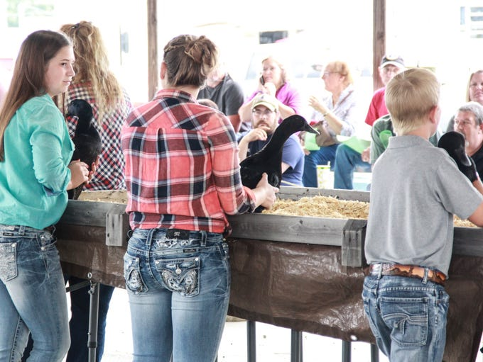 Highlights and portraits of the Jr. Fair Poultry judging