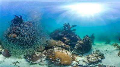 This photo provided by Catlin Seaview Survey shows Marine protected reefs in the Florida Keys, Fla. U.S. government scientists hope people will soon be able to go online and get a 360-degree view of reefs and other underwater wonders, much like Google Map?s ?street view? lets people look at homes.