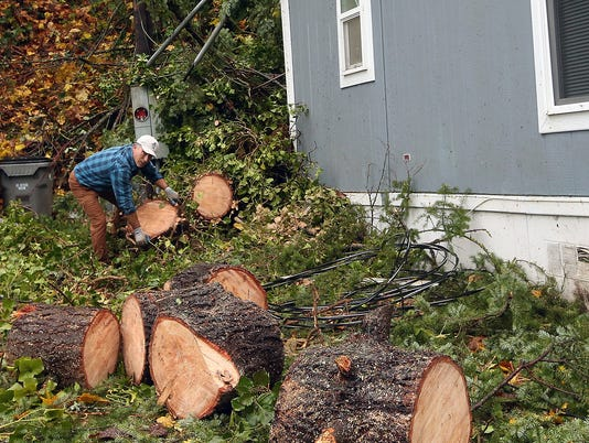 PO-Tree-Into-House-Clean-Up01.JPG