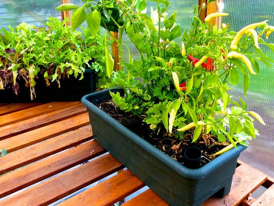 Gardening-Drought Proofing (2)