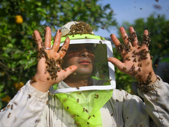 """In anew study published Wednesday, scientistssaid thatbees can be taught to recognize colors as """"symbolic representations for addition and subtraction.""""  In this photo, a worker holds up his hands covered in bees honeybee combs are collected from beehives during the harvest at an apiary in the northern Gaza Strip on April 30, 2017."""