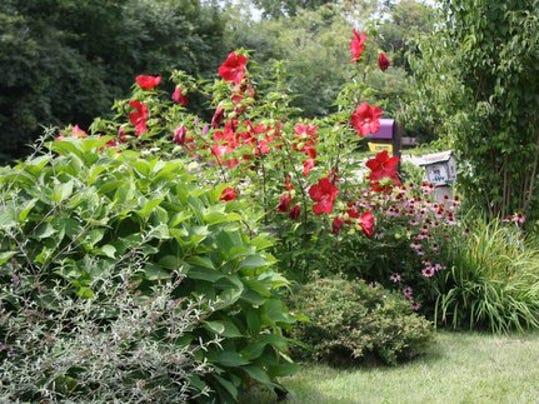 frm garden.jpg