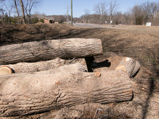 Evidence of trees cut down is seen Thursday, March