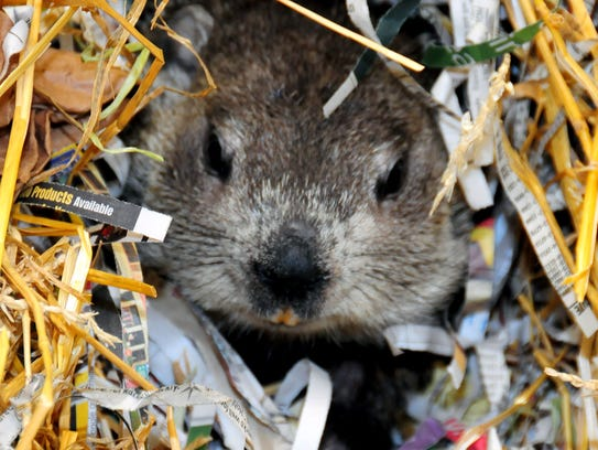 Join the Milwaukee County Zoo's resident groundhog,