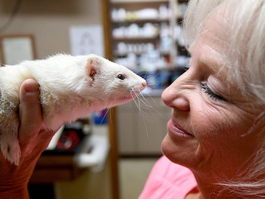 Pattie Thomas and her ferret biddy have a special bond.