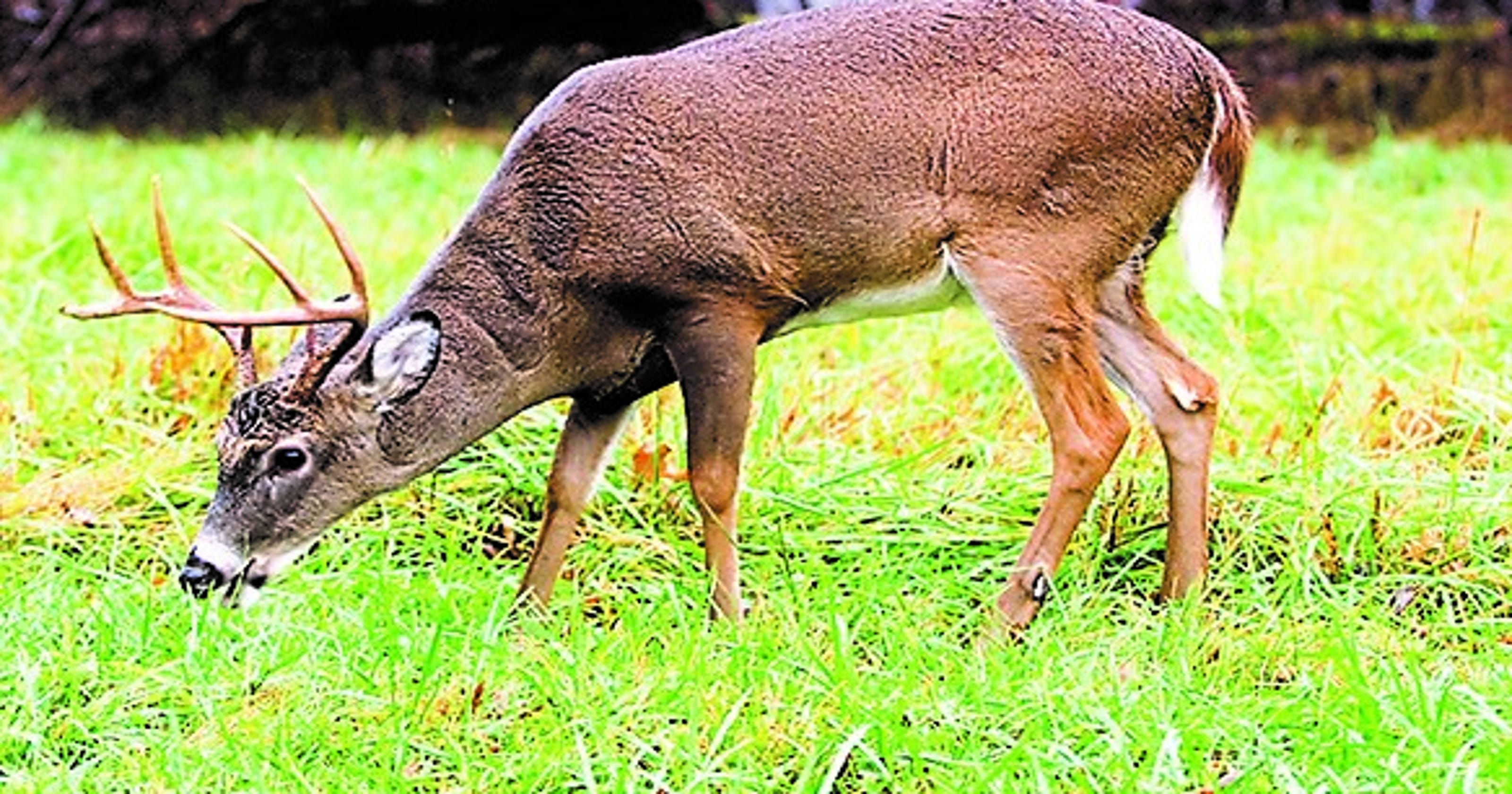 Tennessee deer harvest drops dramatically from previous year