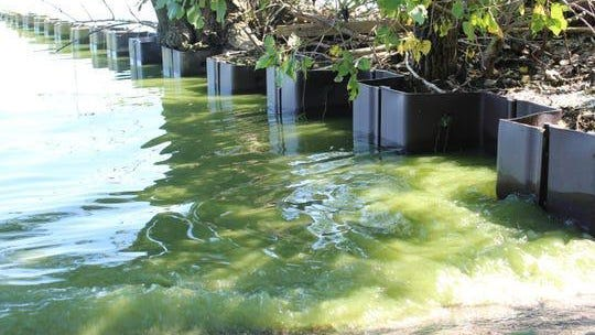 Scientists expect western Lake Erie's 2020 harmful algal blooms (HAB) to reach 4.5 on the NOAA severity index. In 2019, Lake Erie's harmful algal bloom rated 7.3 on a severity index of 1-10, with the algae stretching to Magee Marsh's wildlife area, pictured here.