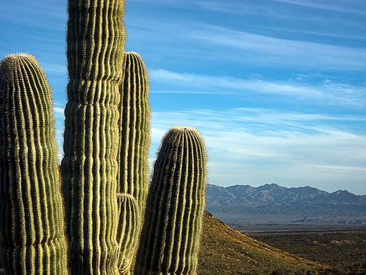 20 Great Places To Take Photos In The Phoenix Area
