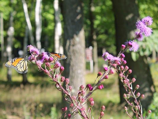 636342459157303958-butterfly-garden.jpg