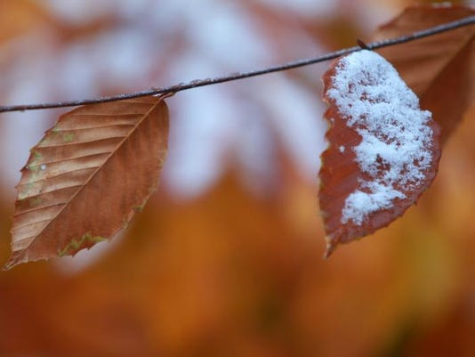 snowleaves111213.jpeg