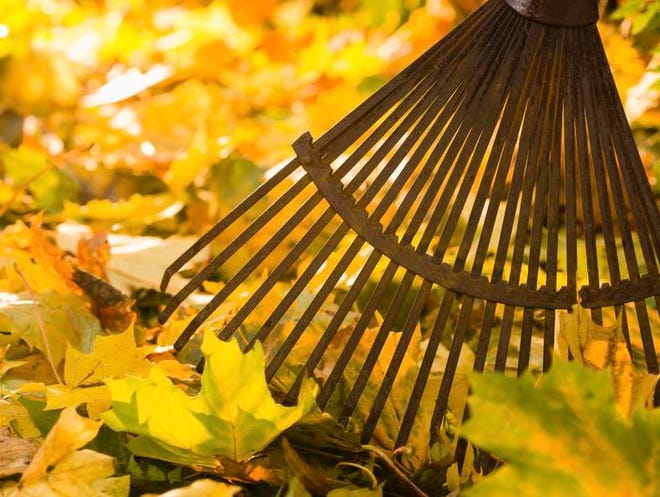 Use leaves as mulch in perennial beds.