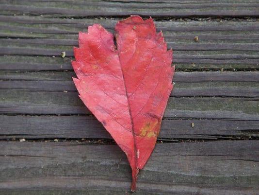 autumnleafheartimg4092.jpg