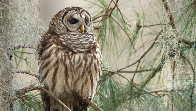 Wild Birds Unlimited 12th anniversary celebration will include a presentation from Hawks Aloft 10 a.m to 3 p.m. on Saturday, Sept. 14.