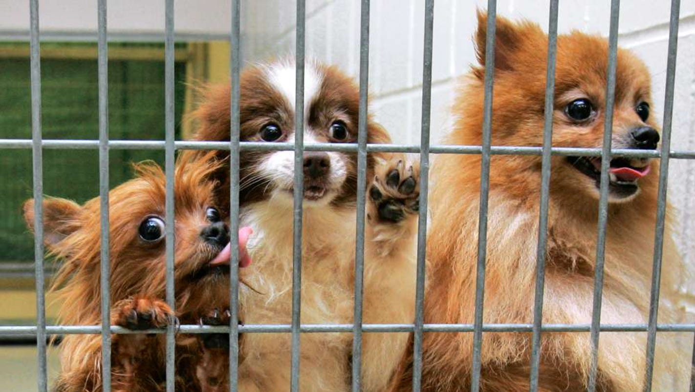 nj lawmakers move to regulate pet sales