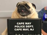 Cape May Police post mugshot of lost dog, bail paid in cookies