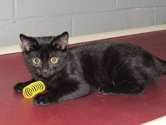Jojo is a purring ball of love. She loves to play and