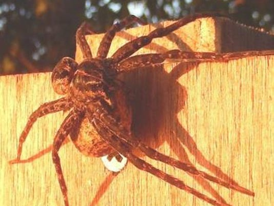 z-Photo 1 -- giant spiders