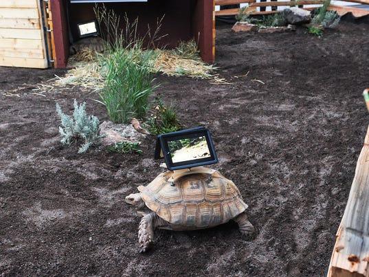 Tortoises iPads 080614a
