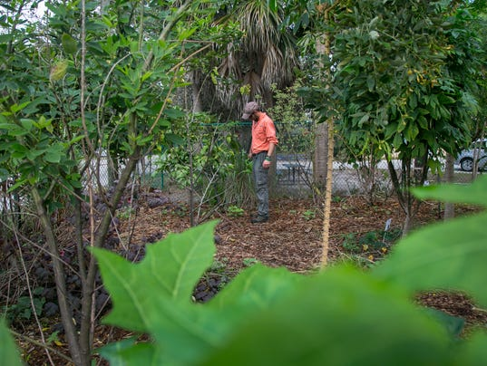 636167182884491265-1foodforest.jpg