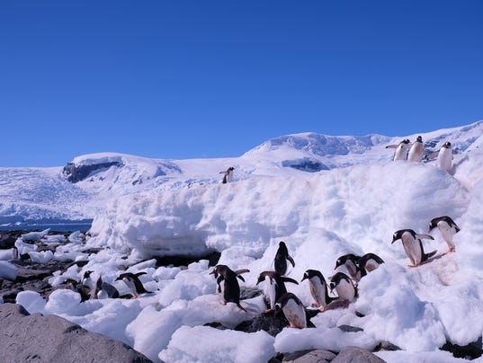636180116767385359-Landscape-with-Penguins-2---CREDIT-LEAH-MURR.JPG